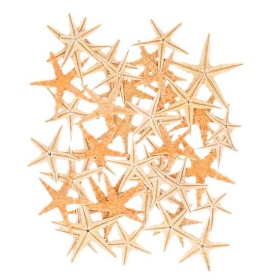 Feest decoratie zeesterretjes 50 stuks